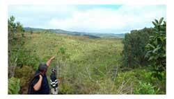 reforestation_01