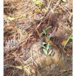 reforestation_03